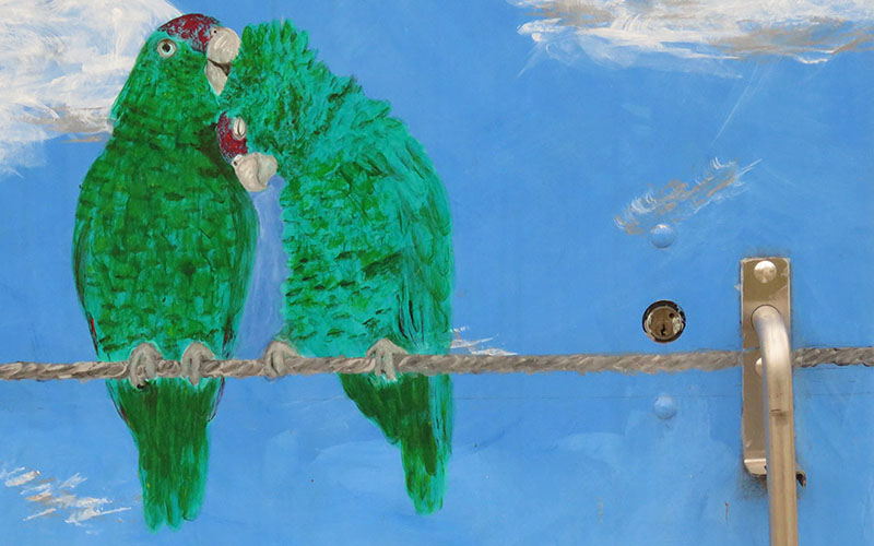 mural of two red-crowned parrots nuzzling each other under blue sky