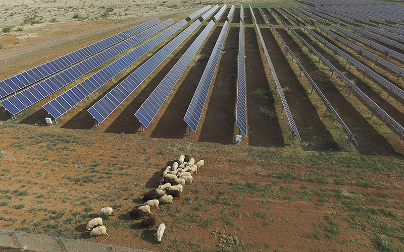 A group of solar panels with sheep surrounding open field.