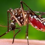 It's not just you. The mosquitoes really are worse this year