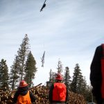 Logging by Copter: Millions Spent to Thin Forest on Steep Slopes of Mount Elden