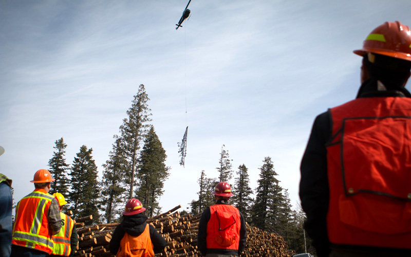 Helicopter thins Coconino national Forest to prevent wildfires.