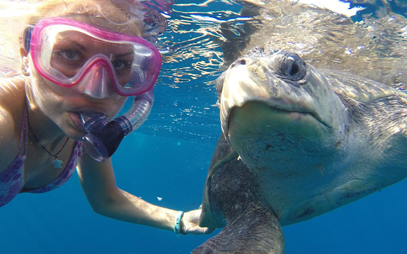 A woman is snorkeling in the ocean with a turtle.